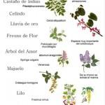 FloresDeMayoElCapricho